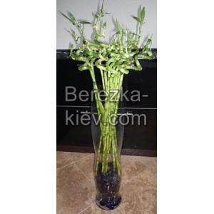 Бамбук удачи с вазой (21шт. 70см.)