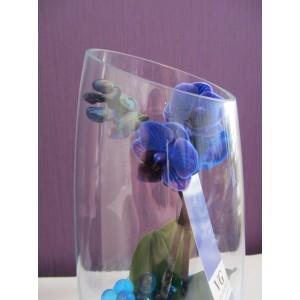 Мини орхидея синяя
