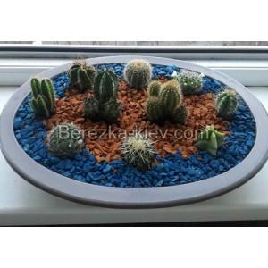 Композиция кактусов в бежевой плошке