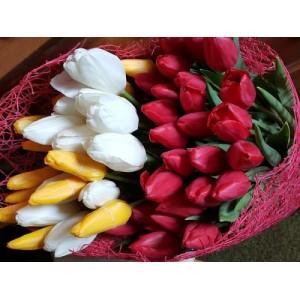 Букет из красных, белых, желтых тюльпанов 51 шт.
