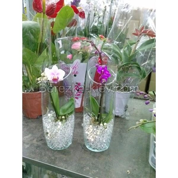 Можно ли орхидею сажать в гидрогель 84