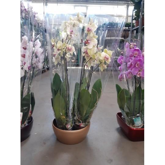 Композиция из Орхидей в кашпо цвет золото