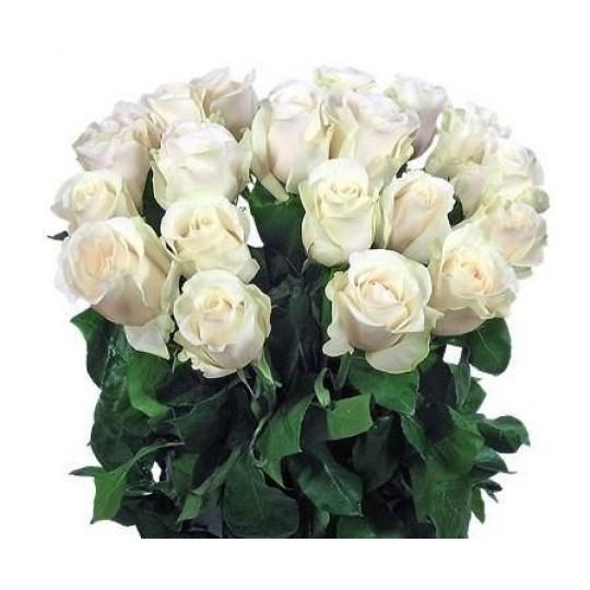 Букет из белых роз 19 шт. высота 50-60см.