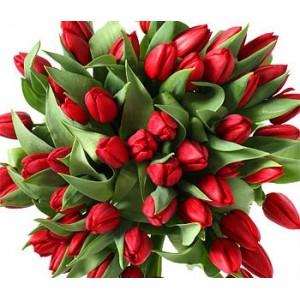 Тюльпан (красный)