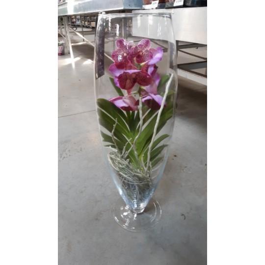 Орхидея Ванда Розовая (ваза бокал 70см.)